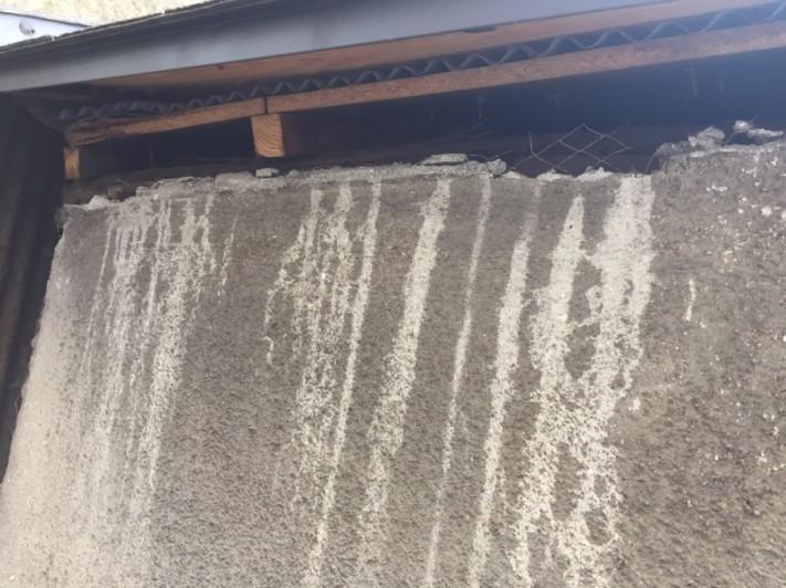 屋根の隙間からコウモリが侵入