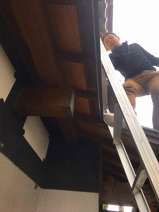 梯子に上って調査している様子